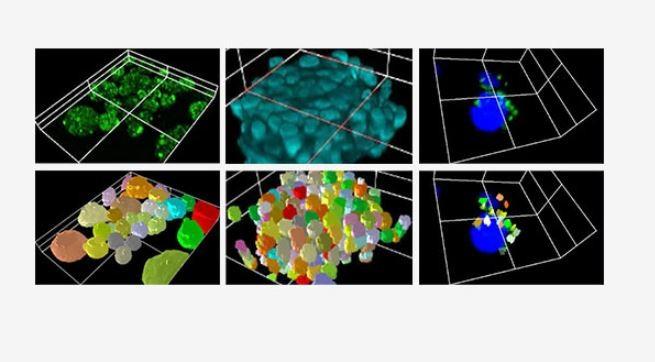 3D cell analysis programvare